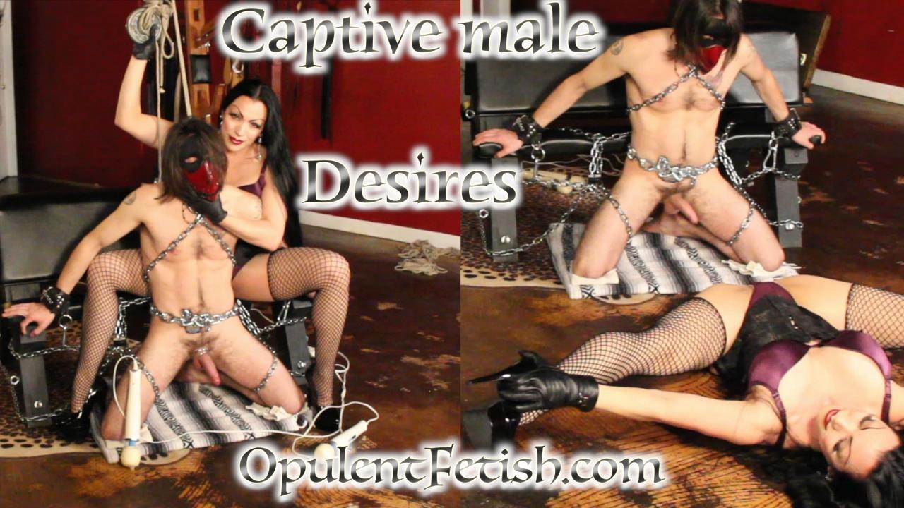 hot porn image of wwe eve torres